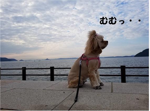f:id:wanwankazoku:20190927000535p:plain