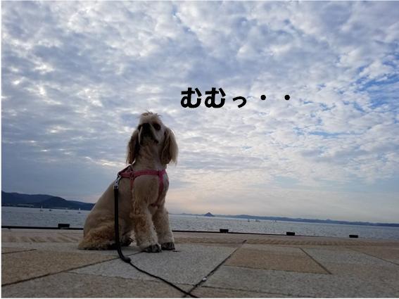 f:id:wanwankazoku:20190927000753p:plain