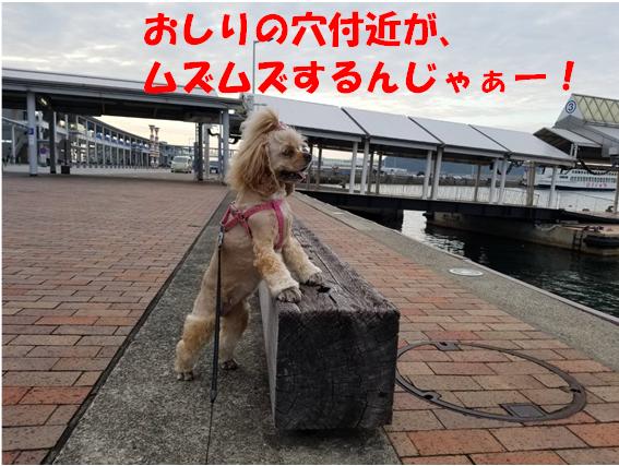 f:id:wanwankazoku:20190927002021p:plain