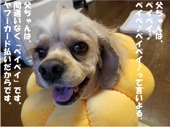 f:id:wanwankazoku:20190928211440p:plain