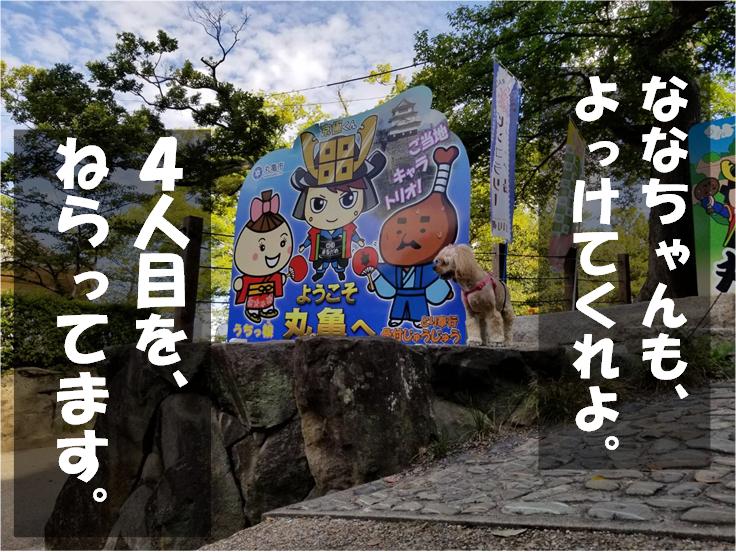 f:id:wanwankazoku:20190929203404p:plain
