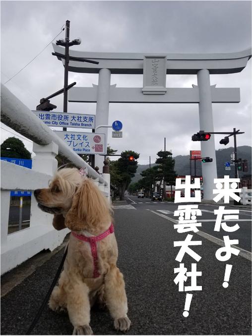f:id:wanwankazoku:20191005205415p:plain
