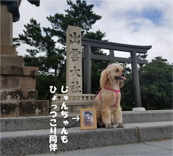 f:id:wanwankazoku:20191005212205p:plain