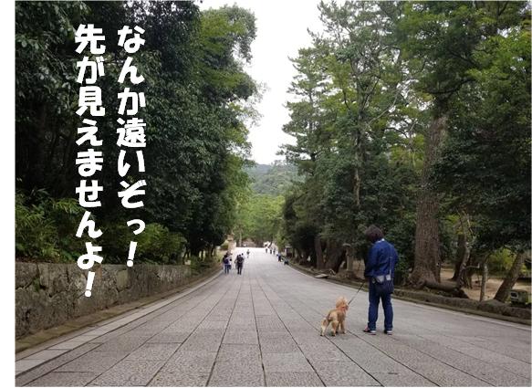 f:id:wanwankazoku:20191005213437p:plain