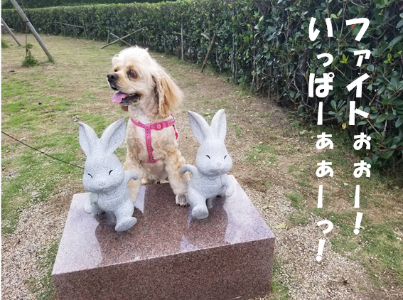 f:id:wanwankazoku:20191005213720p:plain