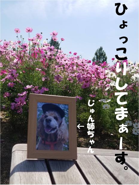 f:id:wanwankazoku:20191008004321p:plain