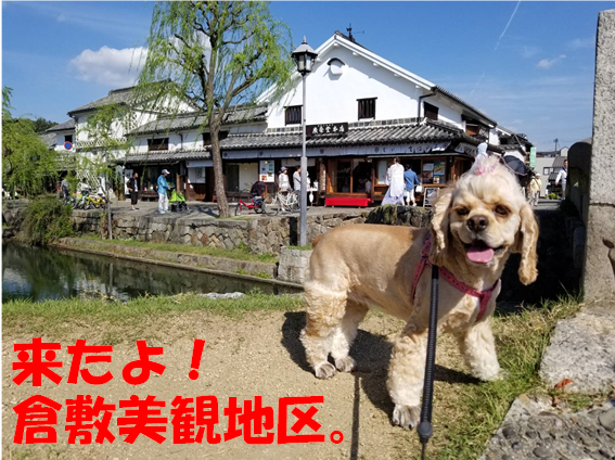 f:id:wanwankazoku:20191009000138p:plain