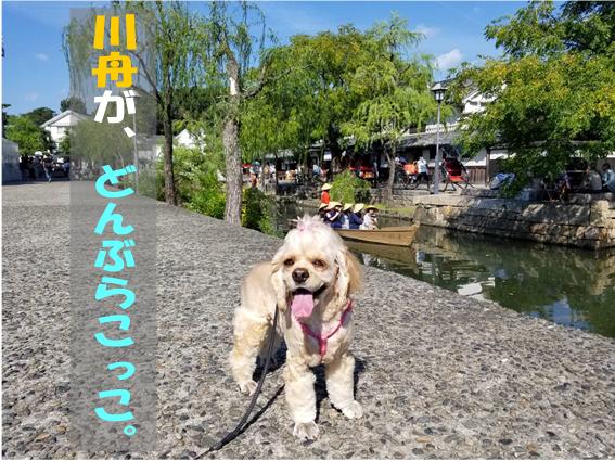 f:id:wanwankazoku:20191009000530p:plain