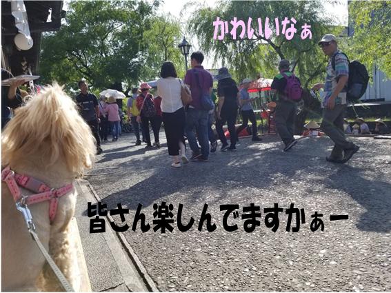 f:id:wanwankazoku:20191009001255p:plain