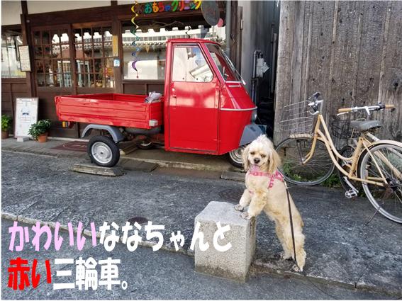 f:id:wanwankazoku:20191009001645p:plain