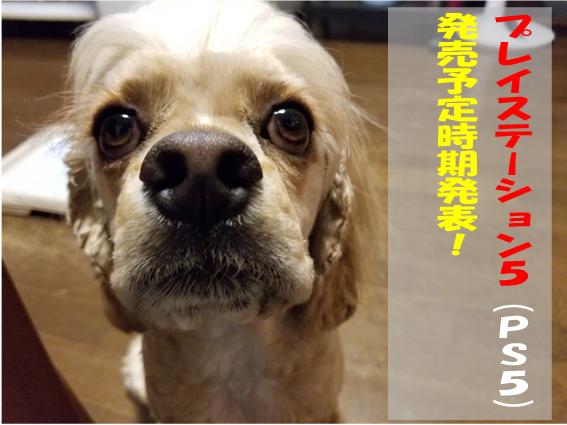 f:id:wanwankazoku:20191009210058p:plain
