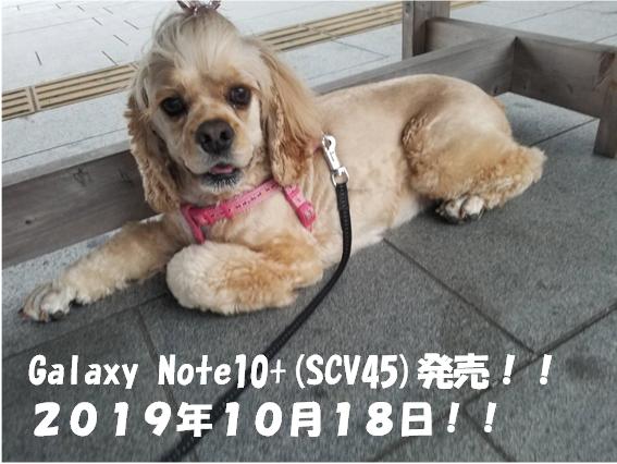 f:id:wanwankazoku:20191012003403p:plain