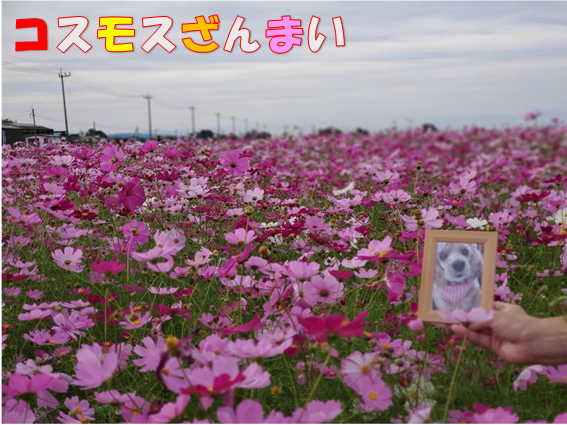 f:id:wanwankazoku:20191029235533p:plain