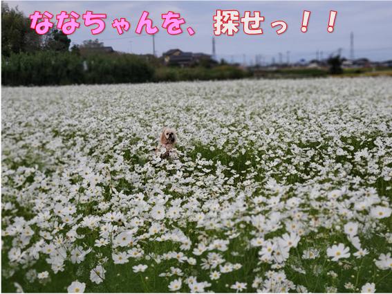 f:id:wanwankazoku:20191030000851p:plain