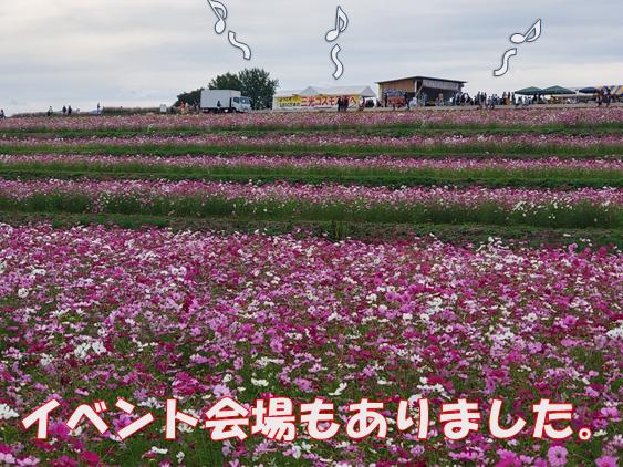 f:id:wanwankazoku:20191030001555p:plain
