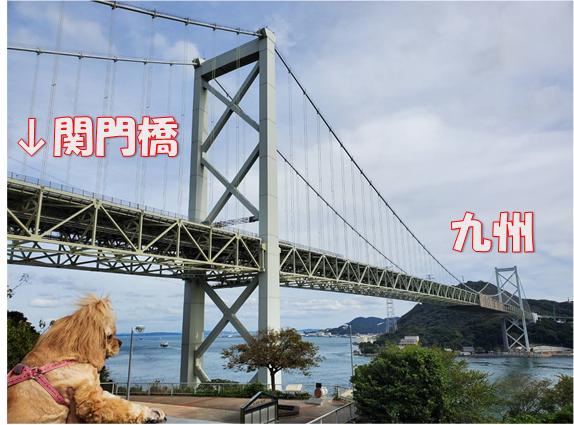 f:id:wanwankazoku:20191030001928p:plain
