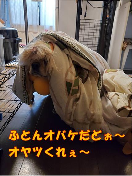 f:id:wanwankazoku:20191031234934p:plain