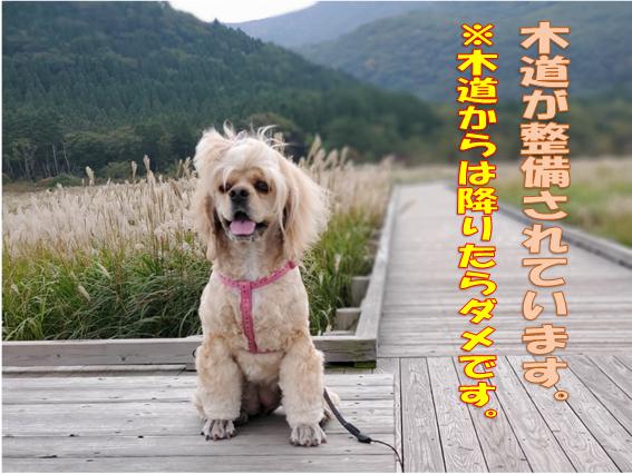 f:id:wanwankazoku:20191108002622p:plain