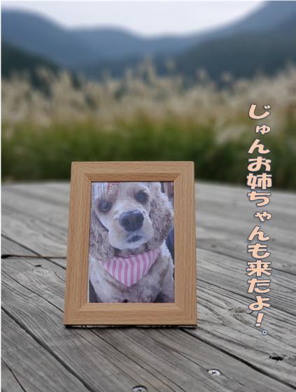 f:id:wanwankazoku:20191108002807p:plain