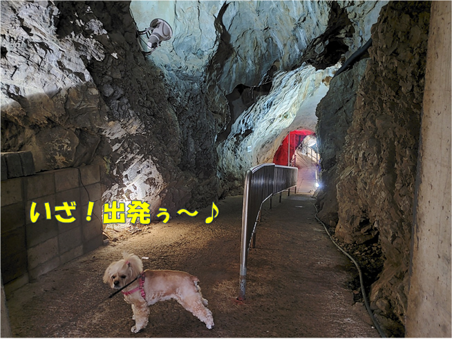 f:id:wanwankazoku:20191109200610p:plain