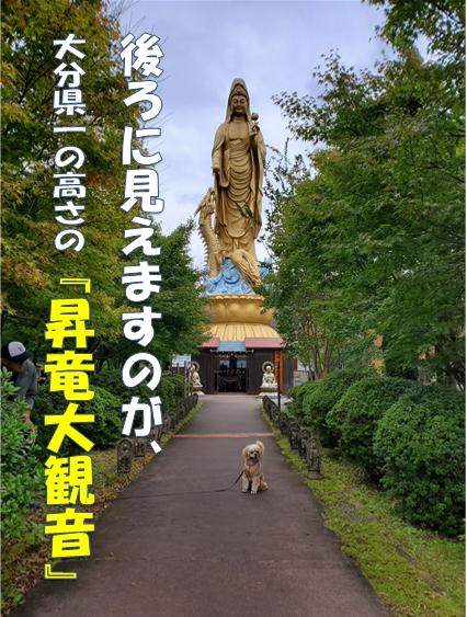 f:id:wanwankazoku:20191109211654p:plain