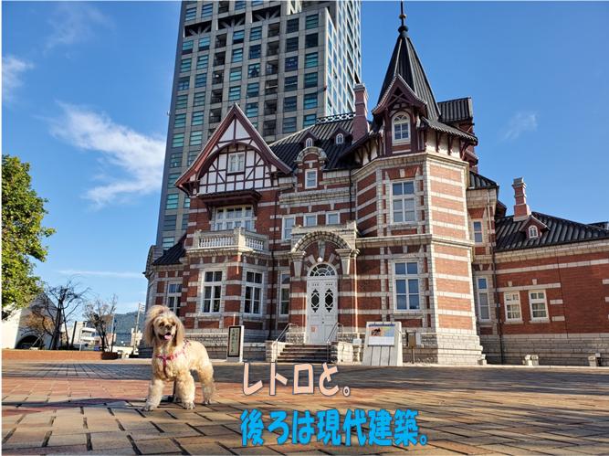f:id:wanwankazoku:20191113001016p:plain