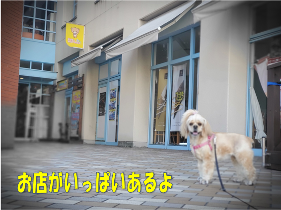 f:id:wanwankazoku:20191113002637p:plain
