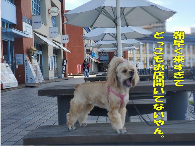 f:id:wanwankazoku:20191113003540p:plain