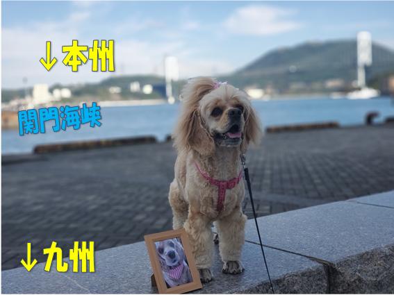 f:id:wanwankazoku:20191113004556p:plain