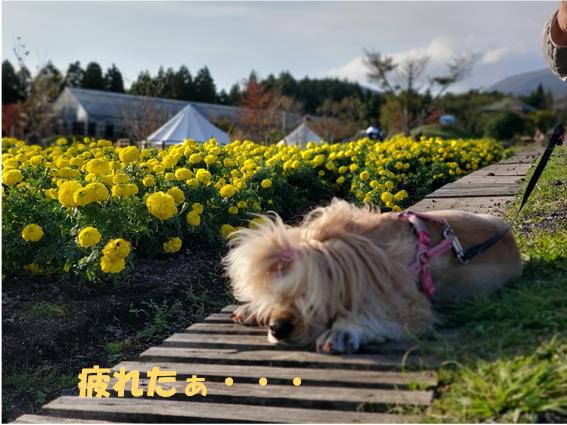 f:id:wanwankazoku:20191116085841p:plain