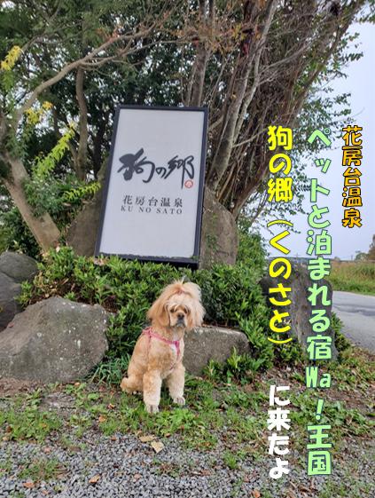 f:id:wanwankazoku:20191117124017p:plain
