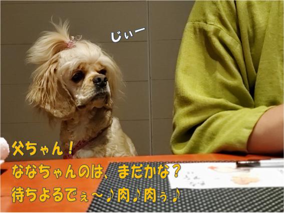 f:id:wanwankazoku:20191117124704p:plain