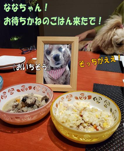 f:id:wanwankazoku:20191117124756p:plain