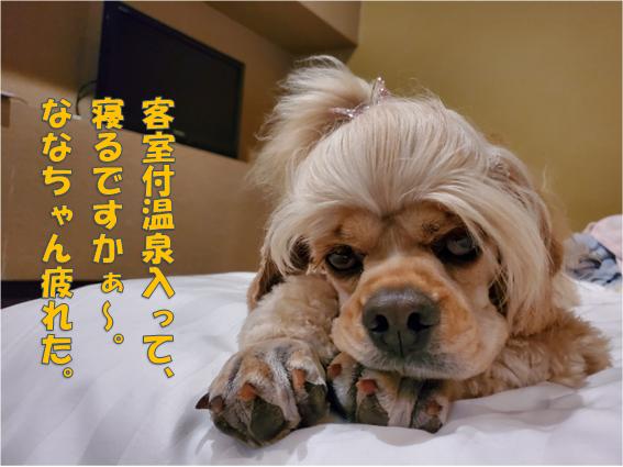 f:id:wanwankazoku:20191117125030p:plain