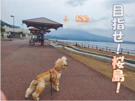 f:id:wanwankazoku:20191117211648p:plain