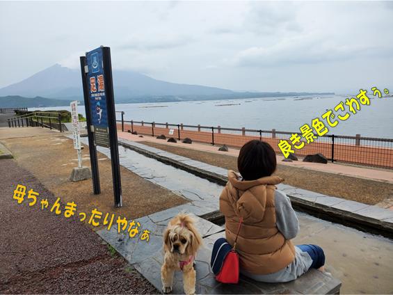 f:id:wanwankazoku:20191117211919p:plain