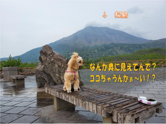 f:id:wanwankazoku:20191117212135p:plain
