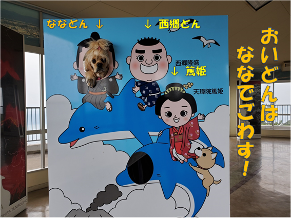 f:id:wanwankazoku:20191117212650p:plain