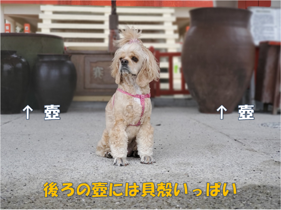 f:id:wanwankazoku:20191119230946p:plain