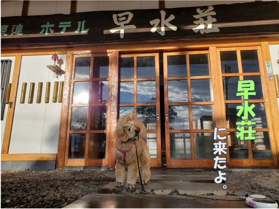 f:id:wanwankazoku:20191120211515p:plain
