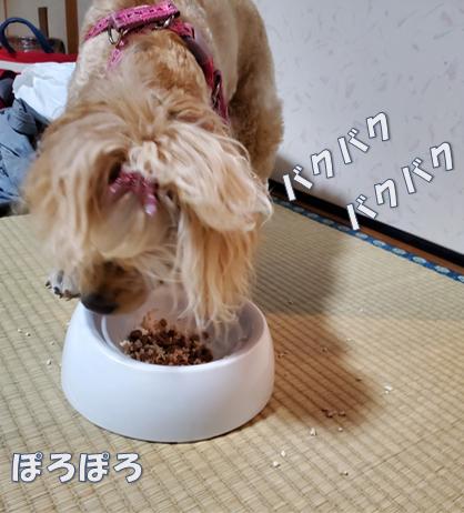 f:id:wanwankazoku:20191120211721p:plain