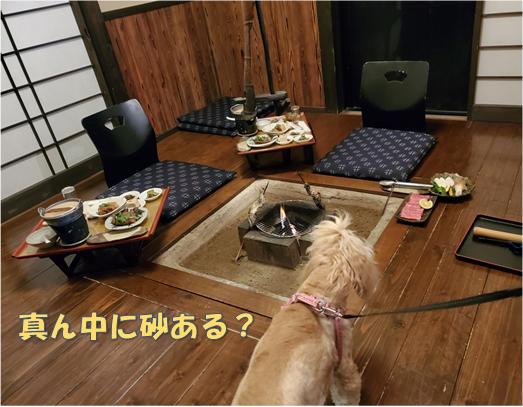 f:id:wanwankazoku:20191120211744p:plain