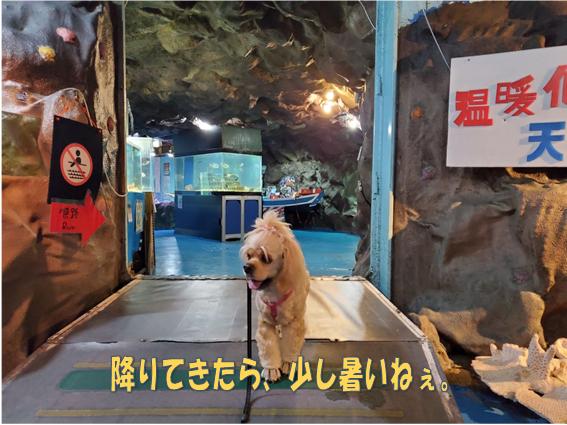 f:id:wanwankazoku:20191123191959p:plain