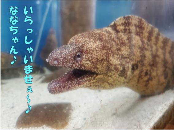 f:id:wanwankazoku:20191123193004p:plain