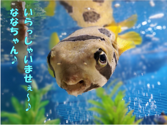 f:id:wanwankazoku:20191123195647p:plain