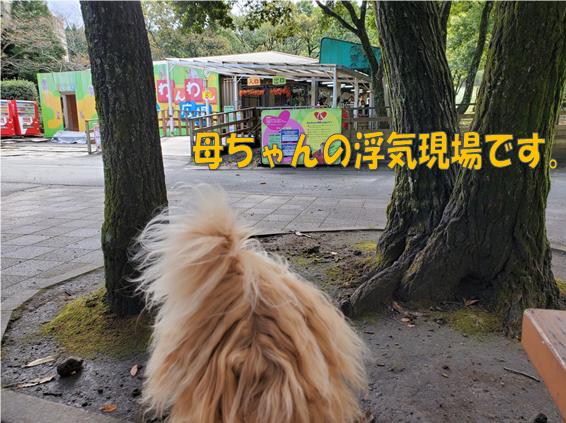 f:id:wanwankazoku:20191128234302p:plain