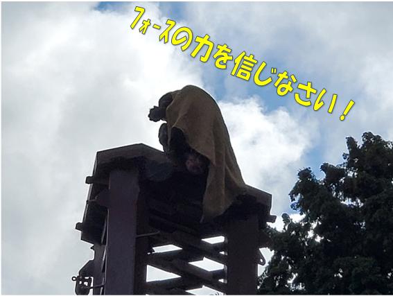 f:id:wanwankazoku:20191128234458p:plain