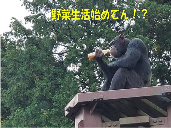 f:id:wanwankazoku:20191128234547p:plain