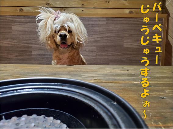 f:id:wanwankazoku:20191201214402p:plain