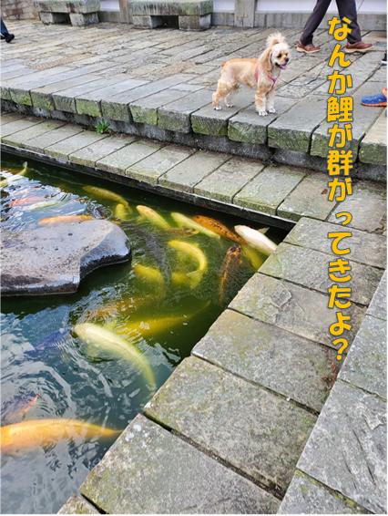 f:id:wanwankazoku:20191204203629p:plain